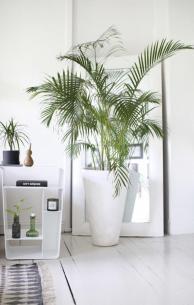 Incredible Indoor Plant Ideas Wartaku