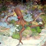 Indoor Outdoor Succulent Gardens All Sizes