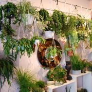 Interesting Hanging Plants Poppies