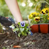 Landscaping Birmingham Getting Ready Plant Flowers