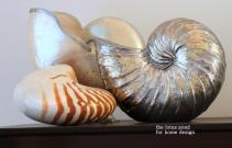 Lotus Pond Home Design Nautilus Shell