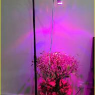 Lovely Benefits Led Grow Lights Guide Light