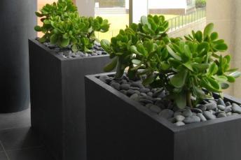 Low Maintenance Plants Lightweight Planters Urban
