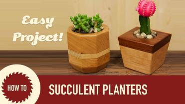 Make Succulent Cactus Planters