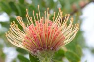 Maui Vacation Day Trip Ideas Exploring Kula Natural