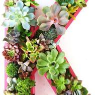 Natural Handmade Living Succulent Decorations