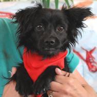 Nevada Spca Animal Rescue Grateful Every Loving