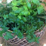 Nothing But Blue Skies Indoor Herb Container Garden
