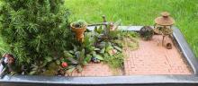 November 2010 Mini Garden Guru Your Miniature