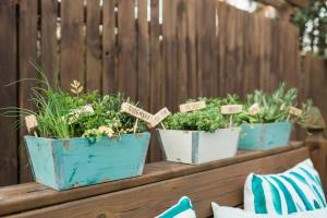 Plant Mini Herb Garden