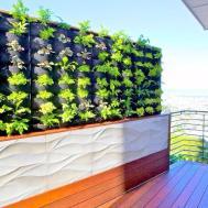 Plants Walls Twin Peaks Vertical Garden