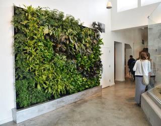 Plants Walls Vertical Garden Systems