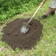 Preparing New Peony Bed Fall Planting Lawn