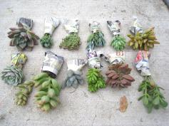 Recycled Love Letters Diy Succulent Garden
