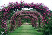 Rose Garden Dengrove Studios Blog