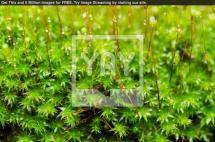 Royalty Fresh Moss Macro Green Nature