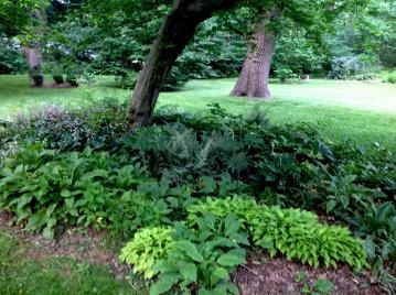 Shade Gardening Carolyn Gardens