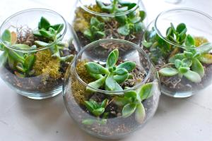 Simple Terrariums Diy Wood White Design