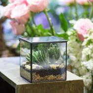 Square Glass Geometric Terrarium Tabletop Succulent Plant