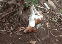 Stray Dogs Were Killed Keep Residence Neat Urdogs
