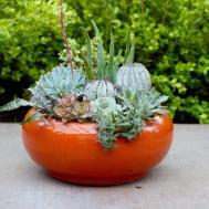 Succulent Planter Inspiration Bright Bold