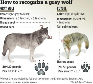 Survive Wolf Attack Truth Survival