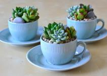 Tea Cup Floral Cups Silk