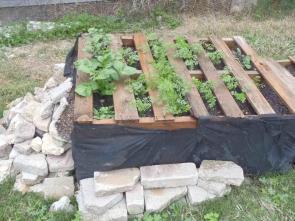 Tomatoes Space Garden Guru Kalegrower Gardenroof Coop