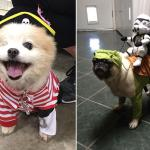 Totally Terrifying Halloween Costume Ideas Dogs