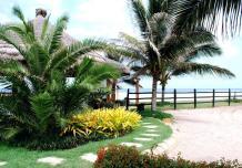 Tropical Backyard Ideas Simple Landscape