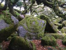 Usnea Lichens Moss Patterns News Natural Navigator