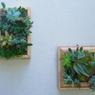 Vertical Succulent Planter Living Wall Art Kit
