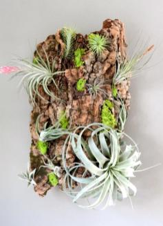 Ways Display Your Air Plants Plant Supply