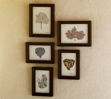Framed Coral Prints Set of 5  Pottery Barn