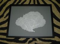 Framed White Sea Fan Seafan Coral Reliquary by 5963impala ...
