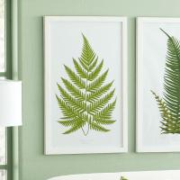 Perennial Fern Prints ?? English - Wall Art - Wisteria