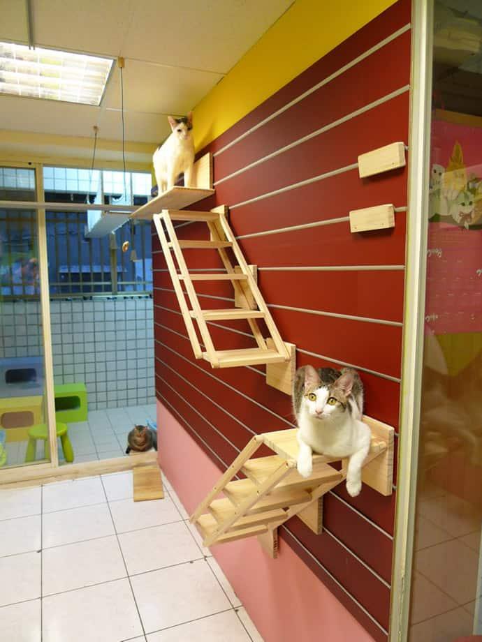 Catswall A Modular Cat Climbing Wall Perfect For You Pet