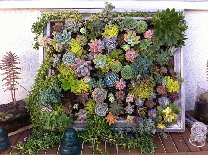Cool DIY Green Living Wall Projects For Your Home   DesignRulz.com