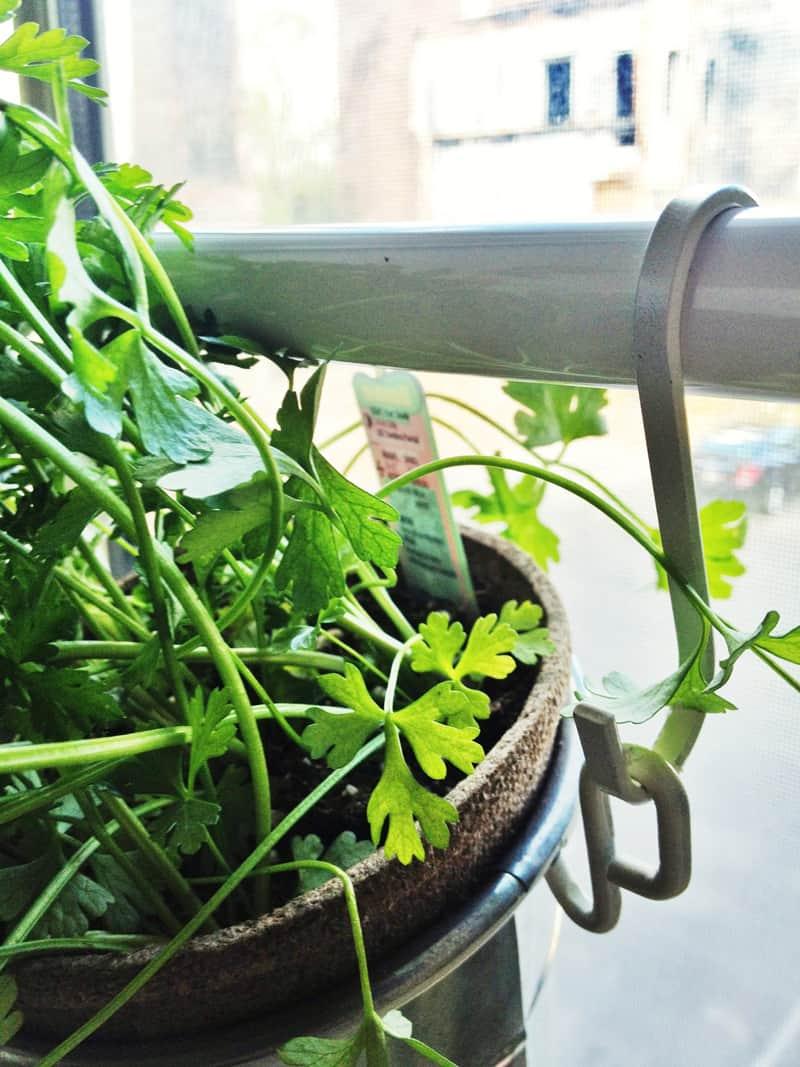 DIY 20 Ideas Of Window Herb Garden For Your Kitchen DesignRulz