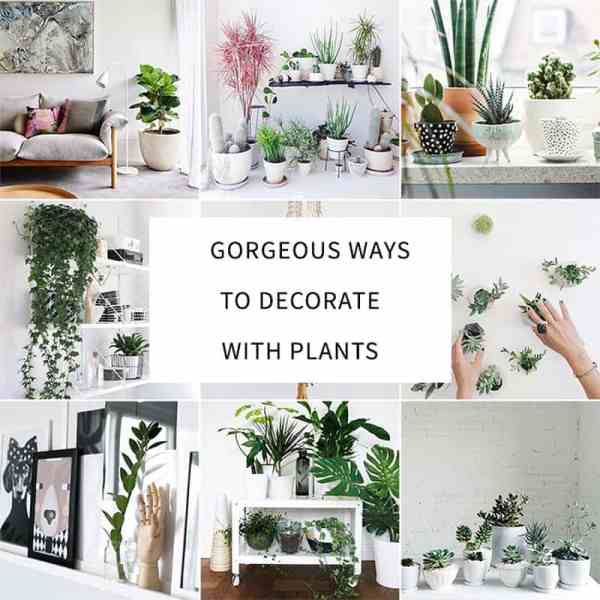 20+ Fall Decorating Ideas Indoor Plant Pictures and Ideas on