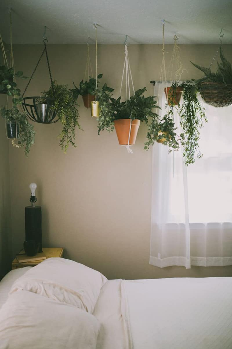 Plant Wall Hangers Indoor