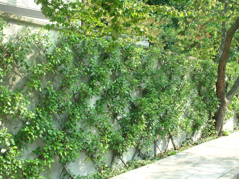 How Build Vertical Garden Frame
