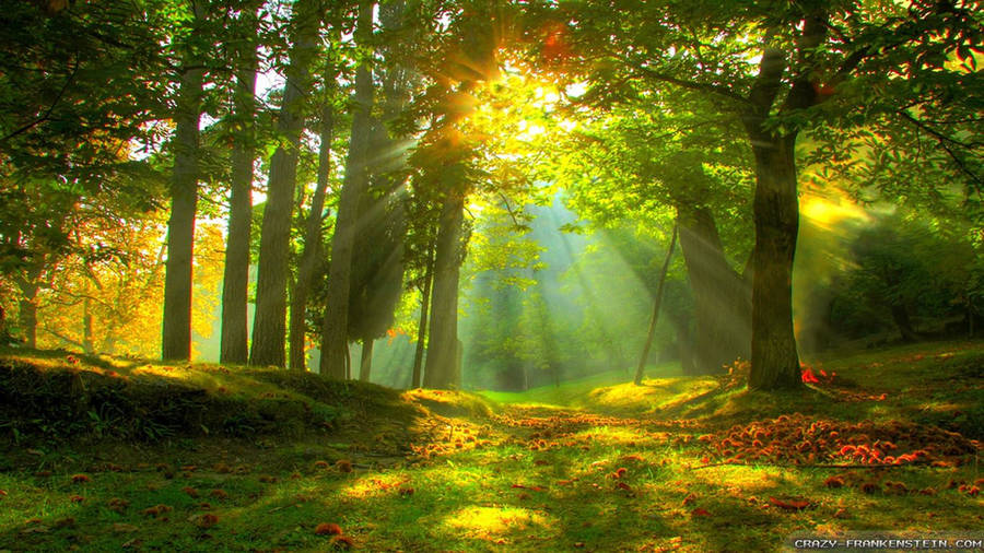 Free Fall Desktop Wallpaper Downloads Relaxing In The Forest Wallpaper Nature Wallpapers 37080