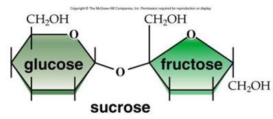 Image result for sucrose