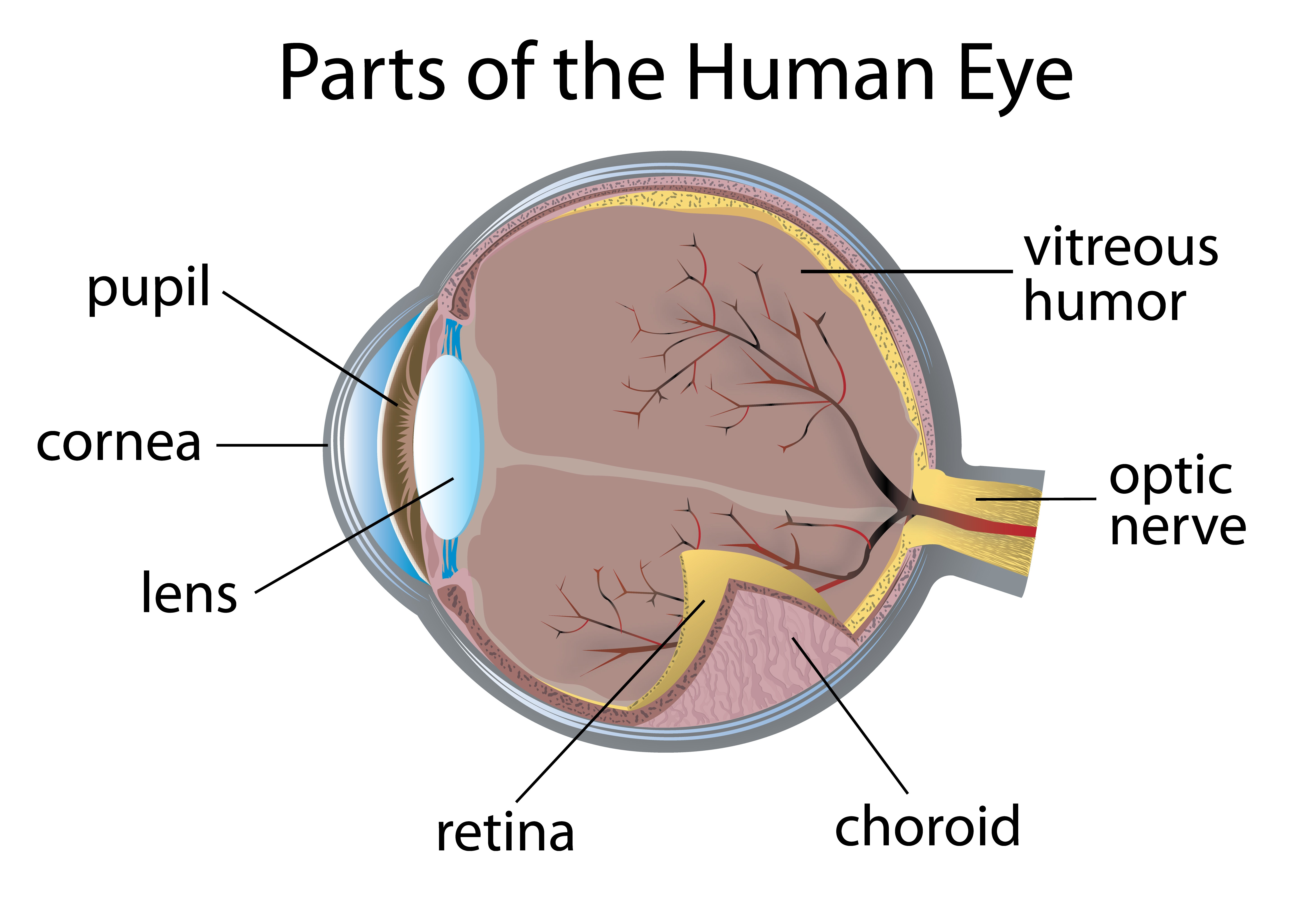 parts of the eye diagram and function sharepoint infrastructure glaucoma diabetes self management