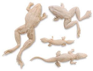 4-Piece Reptile Set