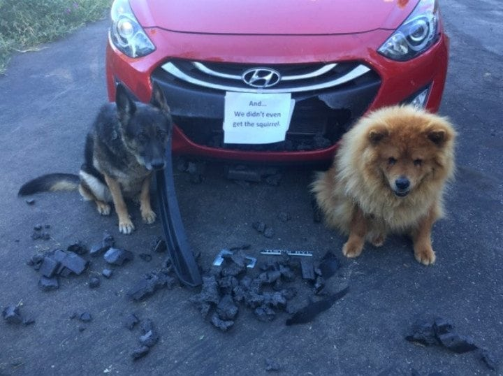 these cute pet shaming