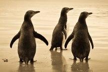 South Island Penguin Discovery Zealand Wildlife Holiday