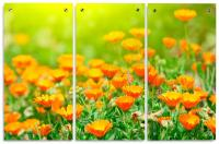 Floral Acrylic Wall Art Panels   Full Color Triptych