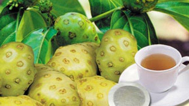 Mengkudu (Morinda citrifolia) dan Khasiatnya